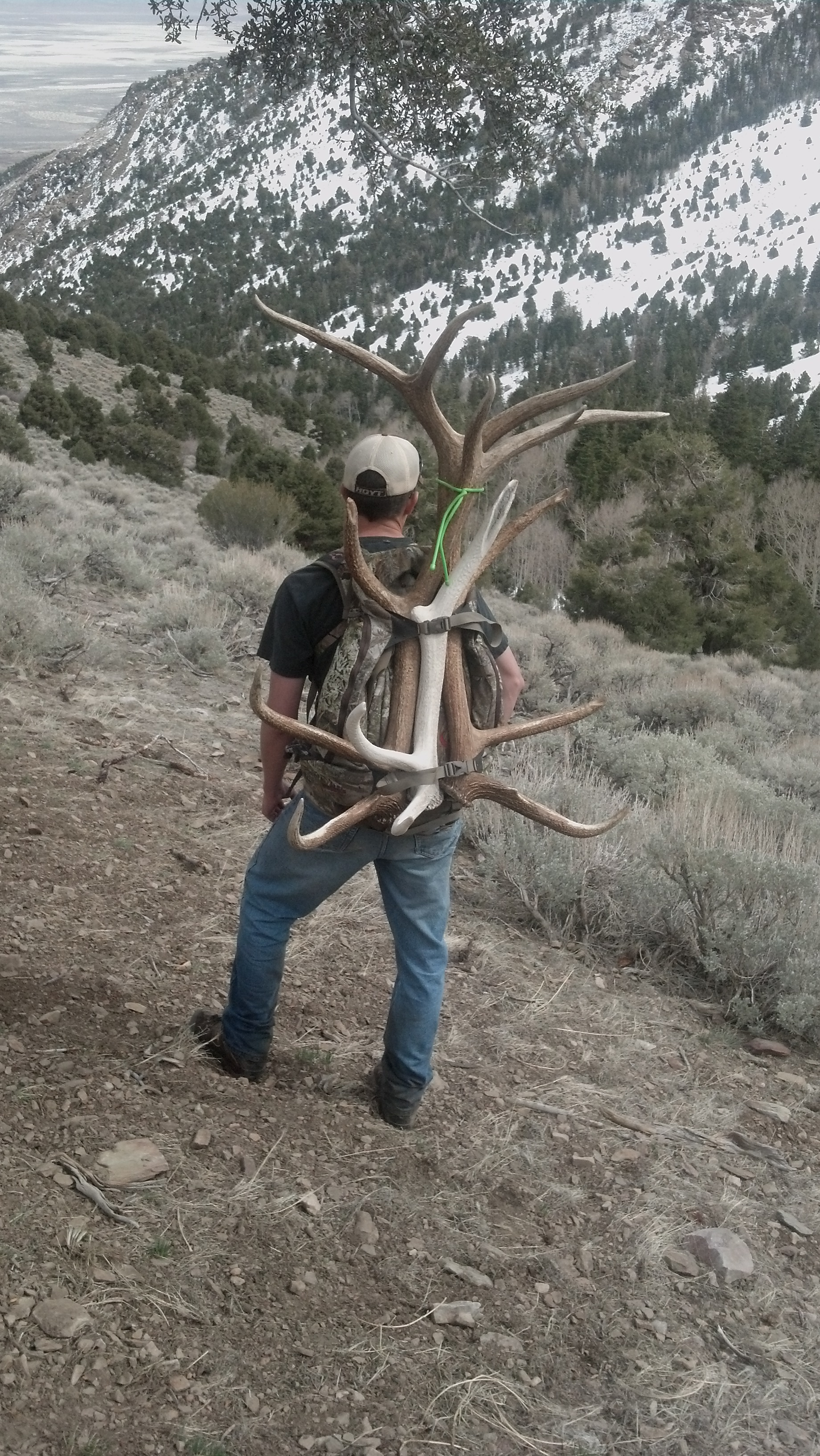 Shed Antler photo file